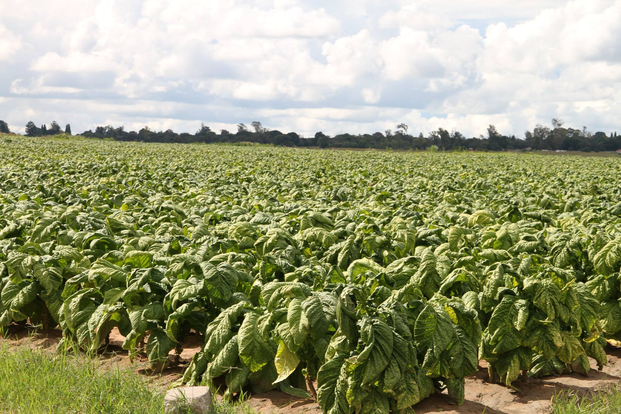 agricultural sector Agricultural development is a pro-poor source of economic growth – about two to four times more effective in raising incomes among the very poor than growth in other sectors.